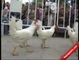 Süper Babaanne Tavuklara Karşı