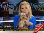 Pelin Çift Canlı Yayına Köpek Yavrusuyla Çıktı