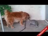 Cesur Kaplumbağa Köpeği Böyle Yendi