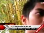 filipinler - Gaspçı orangutan!