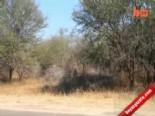 Çitadan Kaçtı Araca Sığındı