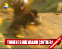 Ağlara Takılan Fok Önce Balıkçıya Sonra Köpeğe Saldırdı!