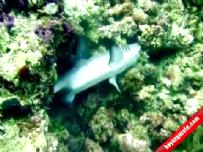 Köpekbalığı bu sefer av oldu!