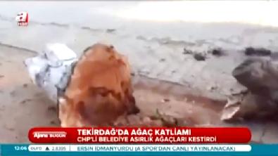 CHP'li Tekirdağ Şarköy Belediyesi ve Eskişehir Büyükşehir Belediyesi Ağaç Katliamı Yaptı!