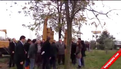 Kocaeli'ndeki ağaçlar taşınacak