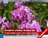 En Güzel Anneler Günü Hediyesi Orkide Çiçekler Antalya'dan (11 Mayıs 2014 Annler Günü)