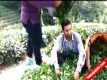 Çay fiyatlarını böyle protesto etti