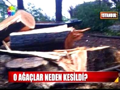 Sarıyer Belediyesi'nin Ağaç Katliamına Vatandaştan Ağır Tepki