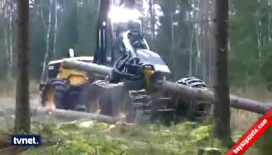 Bu makineye orman dayanmaz!