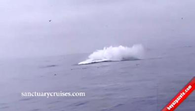 Balina Kanocuların Üzerine Düştü