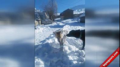 'Tilki Dondu' haberi mizansen çıktı