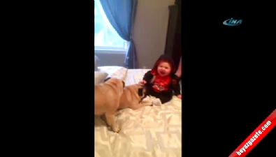 Yavru köpek minik dostuna yapmadık şaklabanlık bırakmadı
