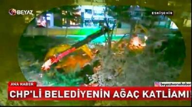 CHP'li belediyenin ağaç katliamı!