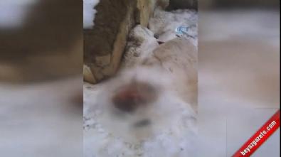 Başkent'te çöp poşetine sarılı yeni doğmuş bebek cesedi bulundu