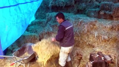 Fabrika işçisi çift, 'Genç Çiftçi Projesi' ile hayvancılığa başladı - BİLECİK