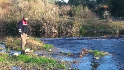 Muğla'da toplu balık ölümleri