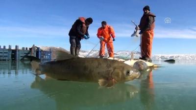 Donan gölde buzları 'motorlu testere'yle kesip balık avlıyorlar - MUŞ