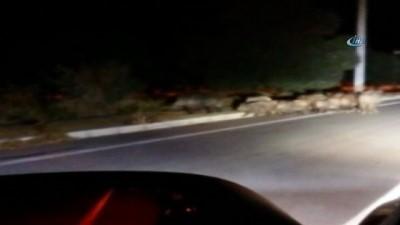 İzmir'de yaban domuzları şehre indi