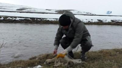 Kars Çayı'nın buzları çözüldü, vatandaşlar balık tuttu