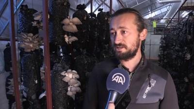 Devlet desteğiyle işini büyüttü, yılda 30 tona yakın mantar üretiyor - ANTALYA