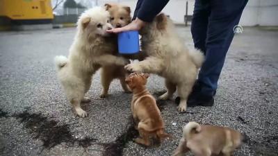 Polisin iyileştirdiği yavru köpekler yeni yılda sahiplendirilecek - EDİRNE
