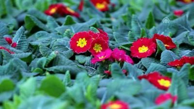 Belediyelere 'yerli süs bitkisi kullanın' çağrısı - YALOVA
