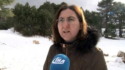 Karda aç kalan sokak hayvanlarına şefkat eli