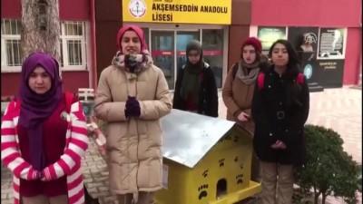 Öğrencilerden sokak kedilerine sıcak yuva - ÇORUM