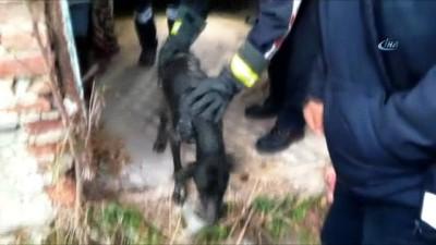 Kuyuya düşen köpek itfaiye tarafından kurtarıldı