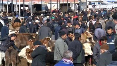 Türkiye'nin en büyük hayvan pazarında şap karantinası