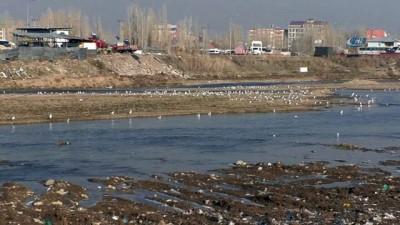 Buzlar eridi martılar Murat Nehrine geri döndü