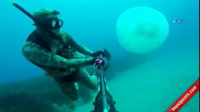 Akdeniz'de dev deniz analarının göçünü dalgıçlar böyle görüntüledi