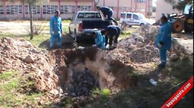 sanliurfa - Şanlıurfa'da binlerce kuş öldü