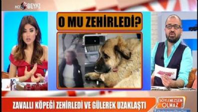beyaz tv - Zavallı köpeği zehirledi ve gülerek uzaklaştı