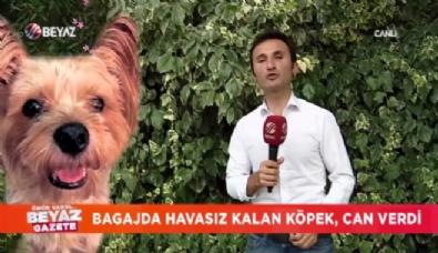 Otobüs bagajında taşıdıkları köpek öldü İzle