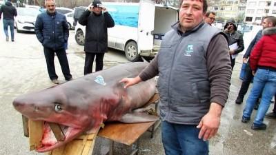 400 kilo ağırlığındaki köpek balığı, vatandaşların ilgi odağı oldu