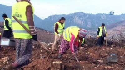 Çıkan yangın 3 gün boyunca söndürülememişti... Menderes'in yanan ormanları bir milyon fidanla buluşuyor