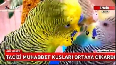 Tacizi muhabbet kuşları ortaya çıkardı