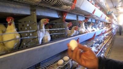 300 tavukla başladı, şimdi 7 bin tavuğu var