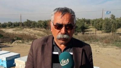 Mersin'de hırsızlar arı kovanlarına dadandı