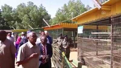 Cumhurbaşkanı Erdoğan'a hediye edilen aslanlar Gaziantep'teki yuvalarına yerleştirildi (1) - GAZİANTEP