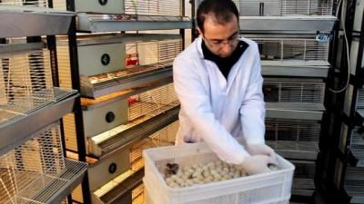 Kahramanmaraş'tan doğaya 12 bin kınalı keklik