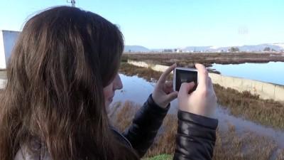 Tuzla Sulak Alanı göçmen kuşları ağırlıyor - MUĞLA