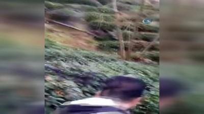 sili -  Köye inen yabanı domuz tüfekle vuruldu