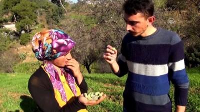 Yalancı baharda bademler 3 ay erken meyve verdi - ANTALYA