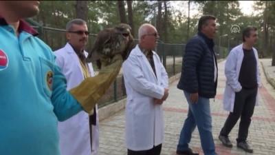 Tedavi edilen 4 kuş doğaya salındı - ANTALYA