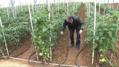 Çanakkale'de ilk kez jeotermal serada 4 mevsim sebzeler üretiliyor