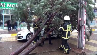 Otomobilin üzerine ağaç devrildi - ADIYAMAN