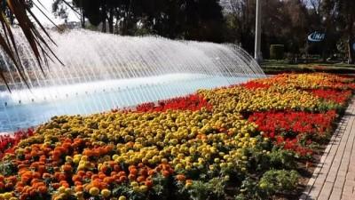 Adana'da kış ortasında bahar havası