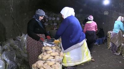 Patatesler soğuk hava depoları yerine mağaralarda saklanıyor - AFYONKARAHİSAR